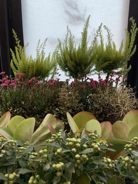 Des jolies plantes qui résistent au temps